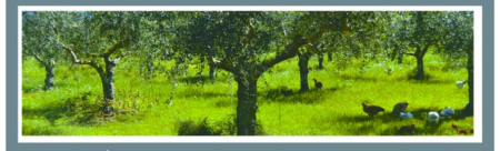 agroforesterie_GRAB_Luberon_web1