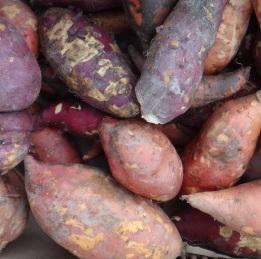Une des variétés de la patate douce, Musaraki
