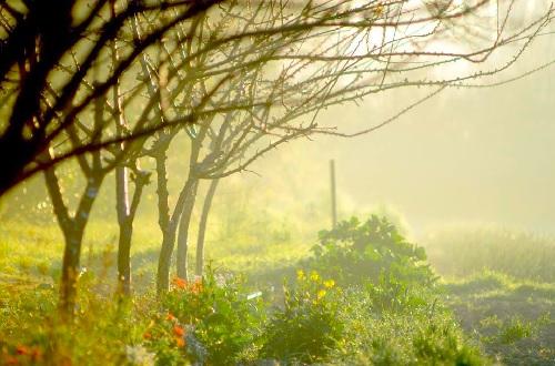 Verger maraîcher bio de la Durette au petit matin - photo Raphael Monot