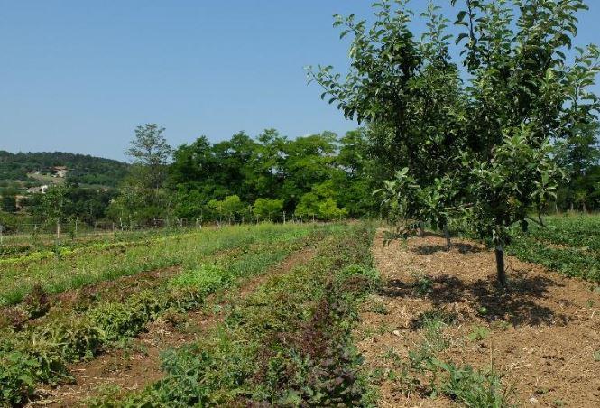 Journée d'échanges sur l'agroforesterie maraîchère - 29/01/21 - Romans (26)