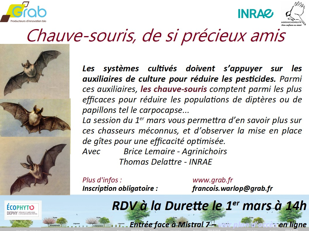 Visite Durette - Installation de gîtes à Chauve-souris